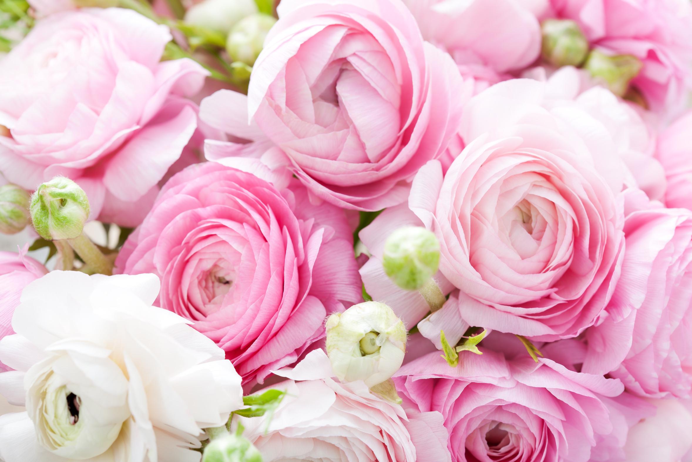 База 2000 екатеринбург цветы оптом в