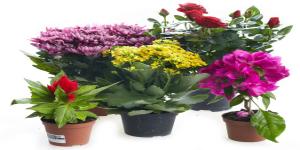 Ооо зеленая сфера живые цветы заказ и доставка цветов по бердянску